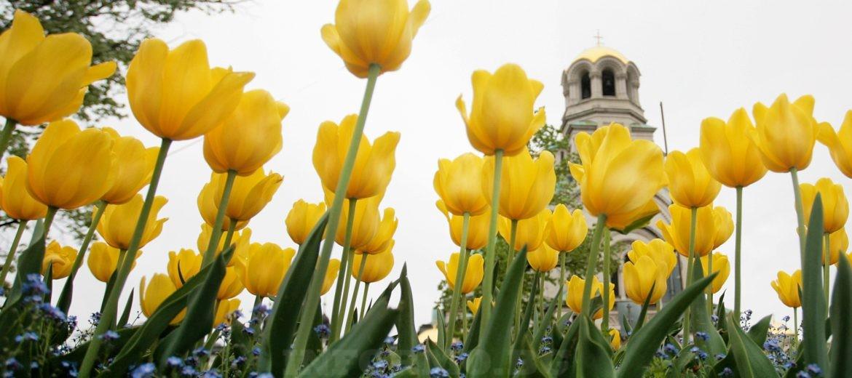 Храм-паметник Св. Александър Невски София, България Снимка: БГНЕС