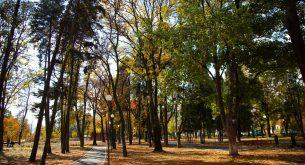 парк, есен