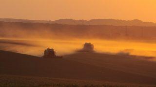 жътва, нива, земеделие