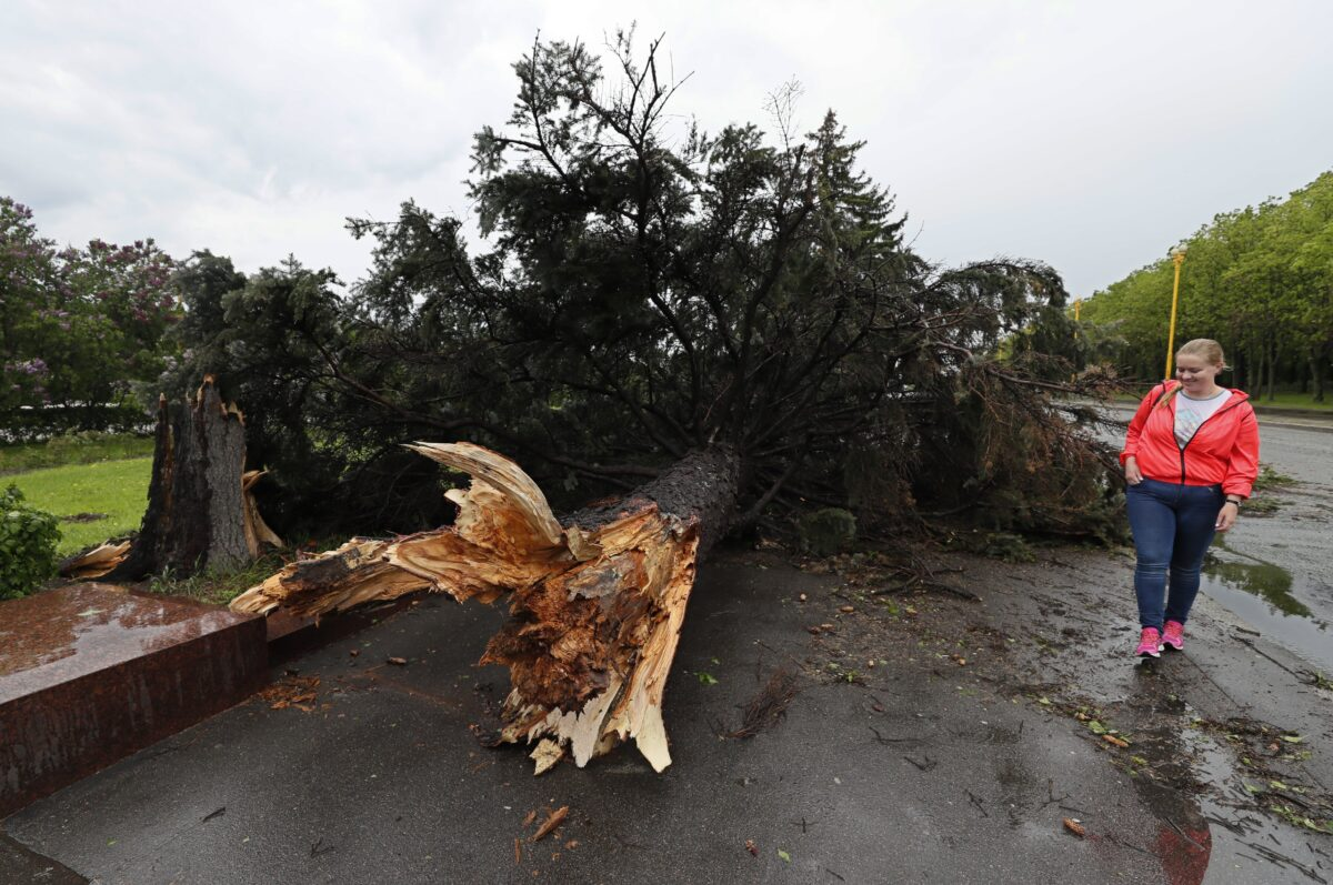 epa05997836 A woman walks next to an uprooted tree after a strong thunderstorm in Moscow, Russia, 29 May 2017. Media reports citing a source of the local emergency services state that at least seven people in variouys districts of the Russian capital died by uprooted trees and 'other objects torn down' by the thunderstorm. EPA/YURI KOCHETKOV