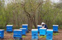 пчела, пчеларство