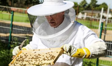 epa06118650 Dieter Schimanski, beekeeper and founder of 'Bee-Rent', holds a honeycomb frame out of a beehive leased by a local bank in Bremen, northern Germany, 31 July 2017. The company offers beeyards for rent to other enterprises. For a monthly payment, leasers get beehives for their premises including a full service by a beekeeper and the honey of their bees.  EPA/FOCKE STRANGMANN