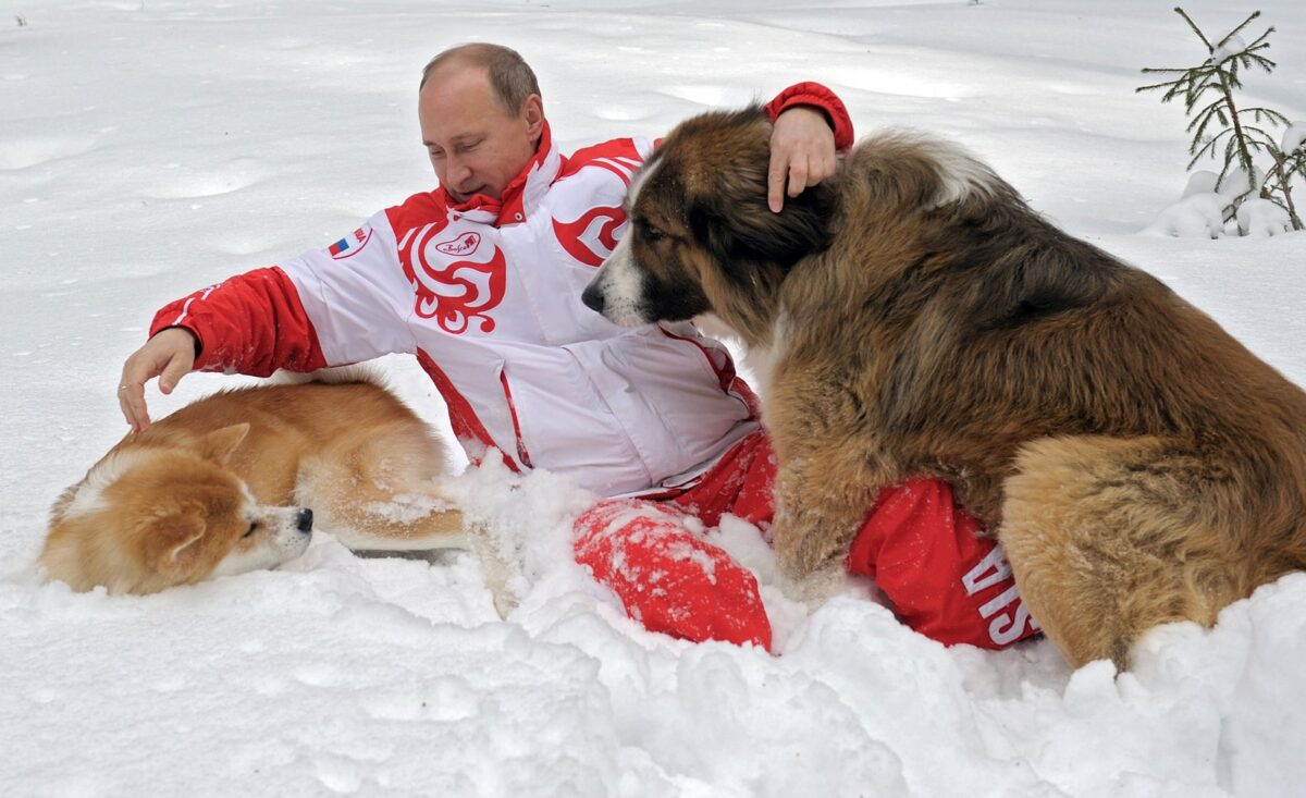 This photo taken on March 24, 2013 shows Russin President Vladimir Putin as he plays with his dogs 'Buffy' (R) and 'Yume' at his residence Novo-Ogariovo, outside Moscow. Bulgarian shepherd dog 'Buffy' was presented to Putin by his Bulgarian counterpart Boyko Borisov while Japanese Prime Minister Yoshihiko Noda offered Putin the puppy 'Yume' as a gift during the G20 in Mexico in June. AFP PHOTO / /RIA NOVOSTI / PRESIDENTIAL PRESS SERVICE / ALEXEY DRUZHINYN (Photo credit should read Alexsey Druginyn/AFP/Getty Images)