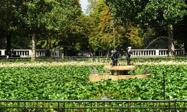 борисова градина