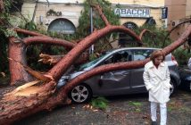A view of a fallen tree after strong winds hit Terracina