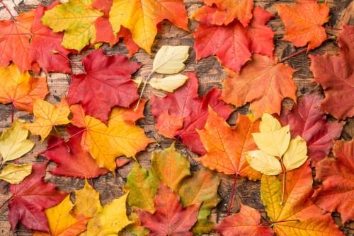 есен, листа