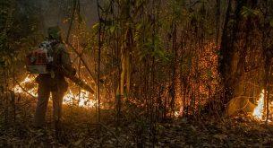 Италиански области продължават борбата с много горски пожари